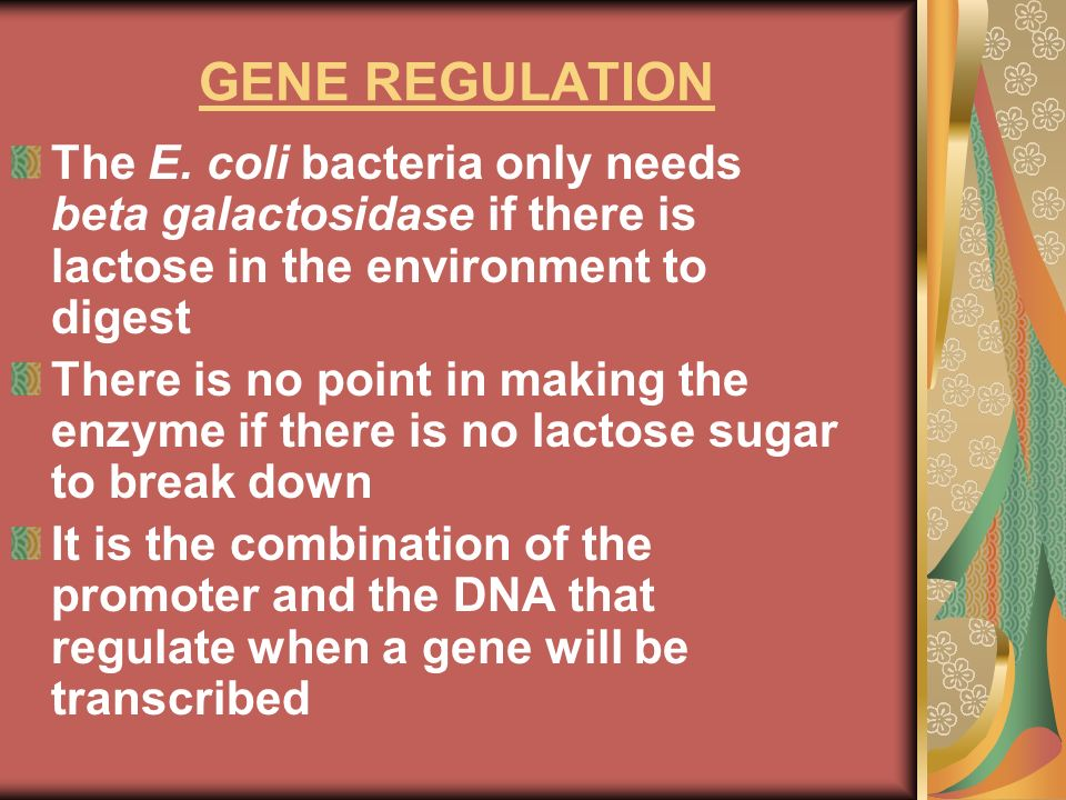 GENE REGULATIONThe E. coli bacteria only needs beta galactosidase if there is lactose in the environment to digest.