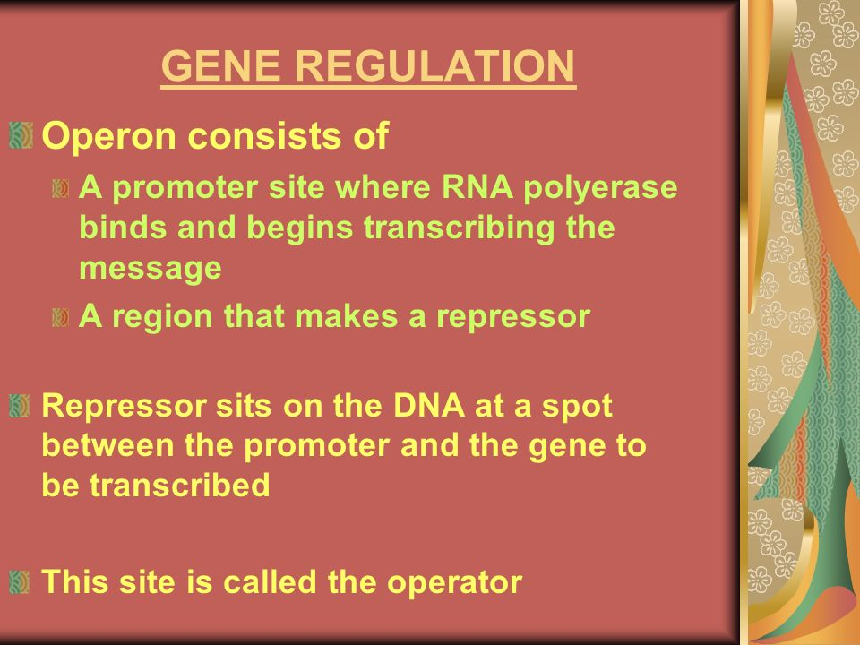 GENE REGULATION Operon consists of