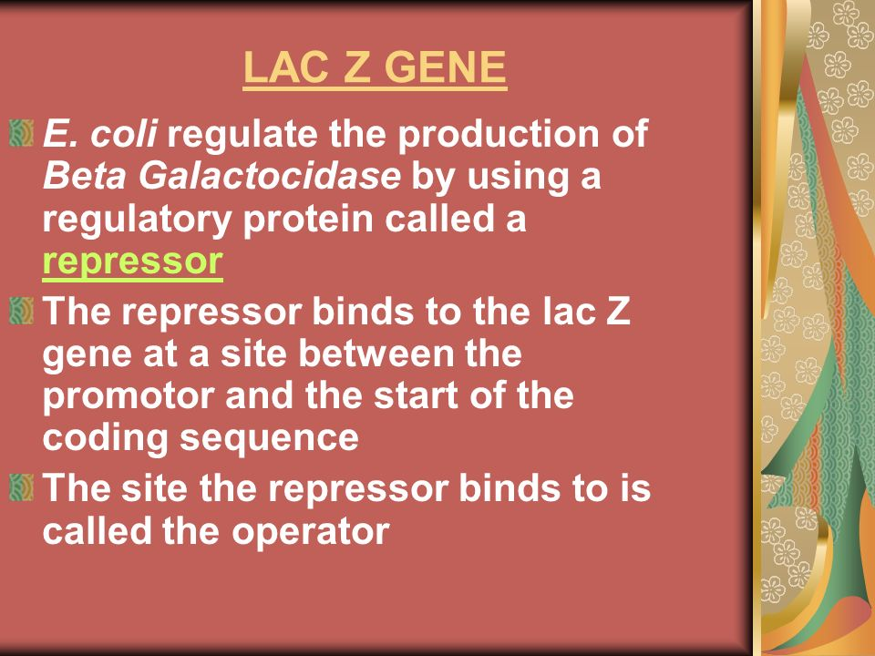 LAC Z GENE E. coli regulate the production of Beta Galactocidase by using a regulatory protein called a repressor.