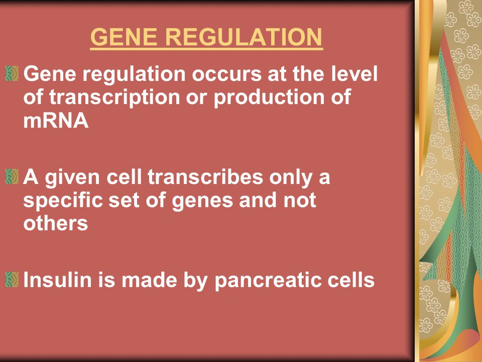 GENE REGULATION Gene regulation occurs at the level of transcription or production of mRNA.