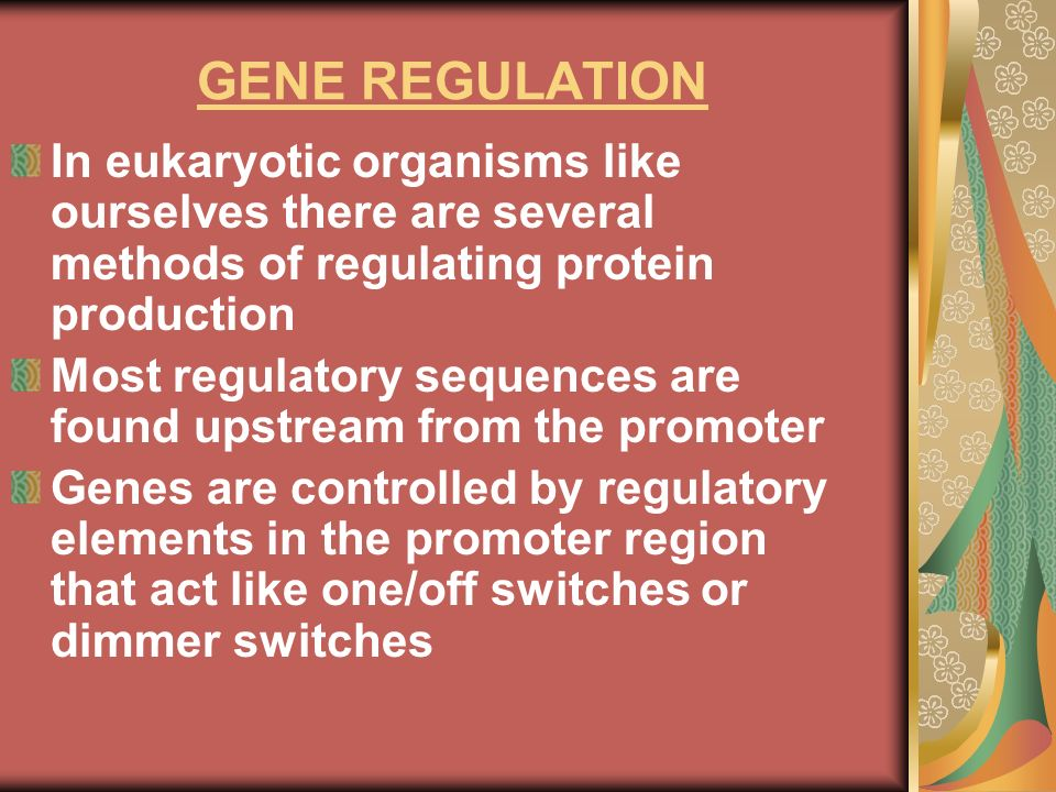 GENE REGULATIONIn eukaryotic organisms like ourselves there are several methods of regulating protein production.