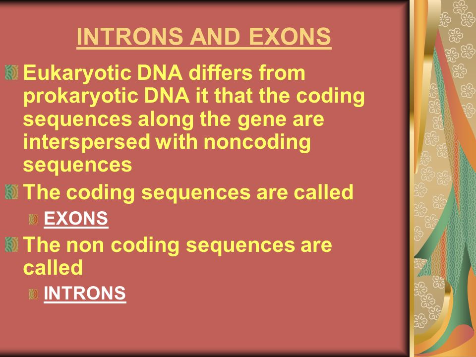 INTRONS AND EXONSEukaryotic DNA differs from prokaryotic DNA it that the coding sequences along the gene are interspersed with noncoding sequences.