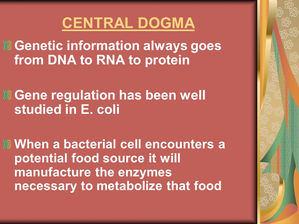 CENTRAL DOGMAGenetic information always goes from DNA to RNA to protein. Gene regulation has been well studied in E. coli.