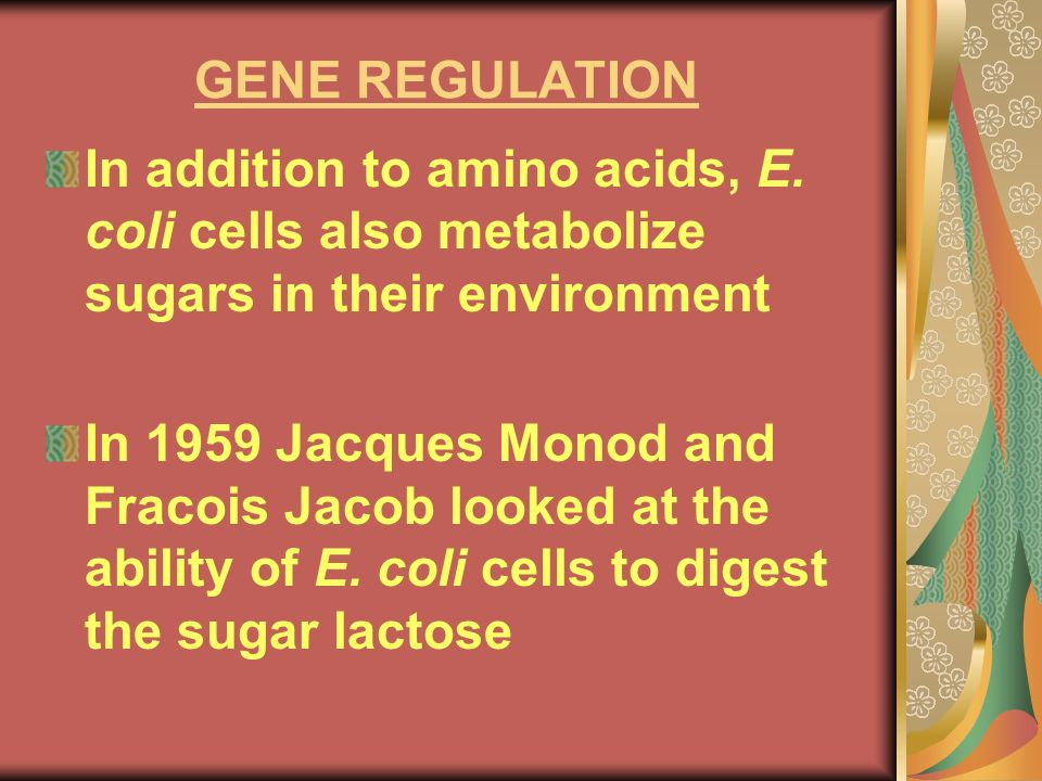 GENE REGULATION In addition to amino acids, E. coli cells also metabolize sugars in their environment.
