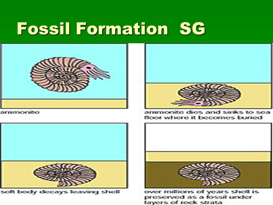 Fossil Formation SG