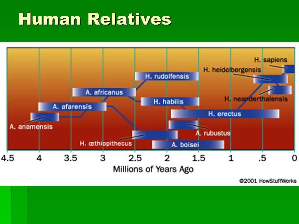 Human Relatives
