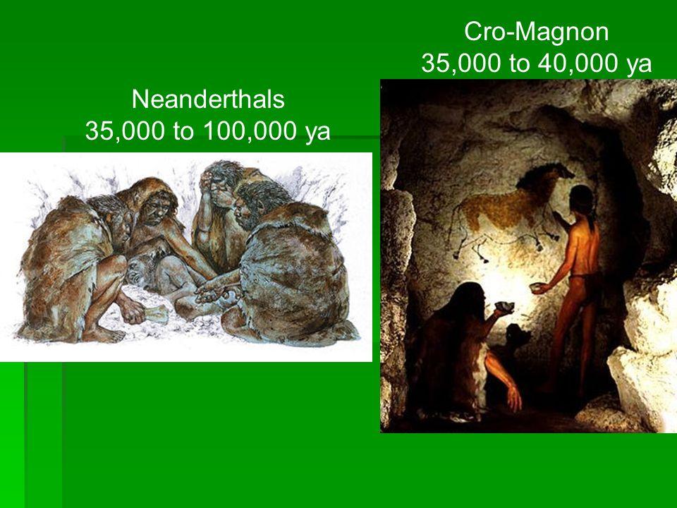 Cro-Magnon 35,000 to 40,000 ya Neanderthals 35,000 to 100,000 ya