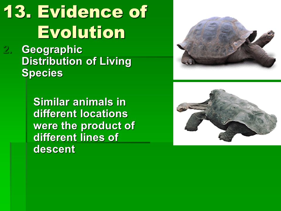 13. Evidence of Evolution Geographic Distribution of Living Species