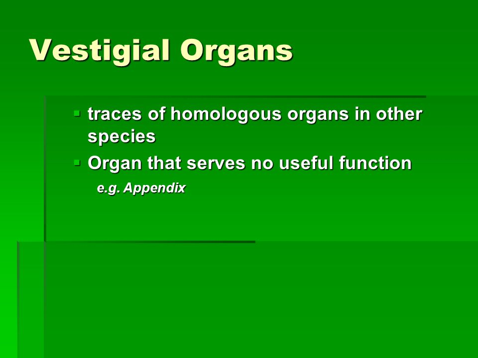 Vestigial Organs traces of homologous organs in other species