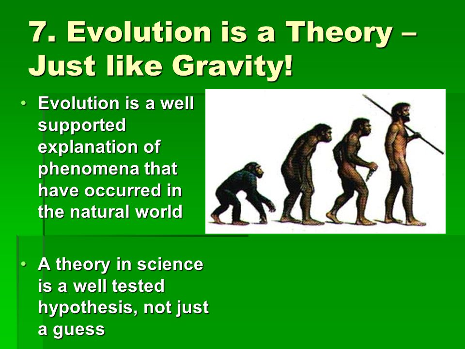 7. Evolution is a Theory – Just like Gravity!