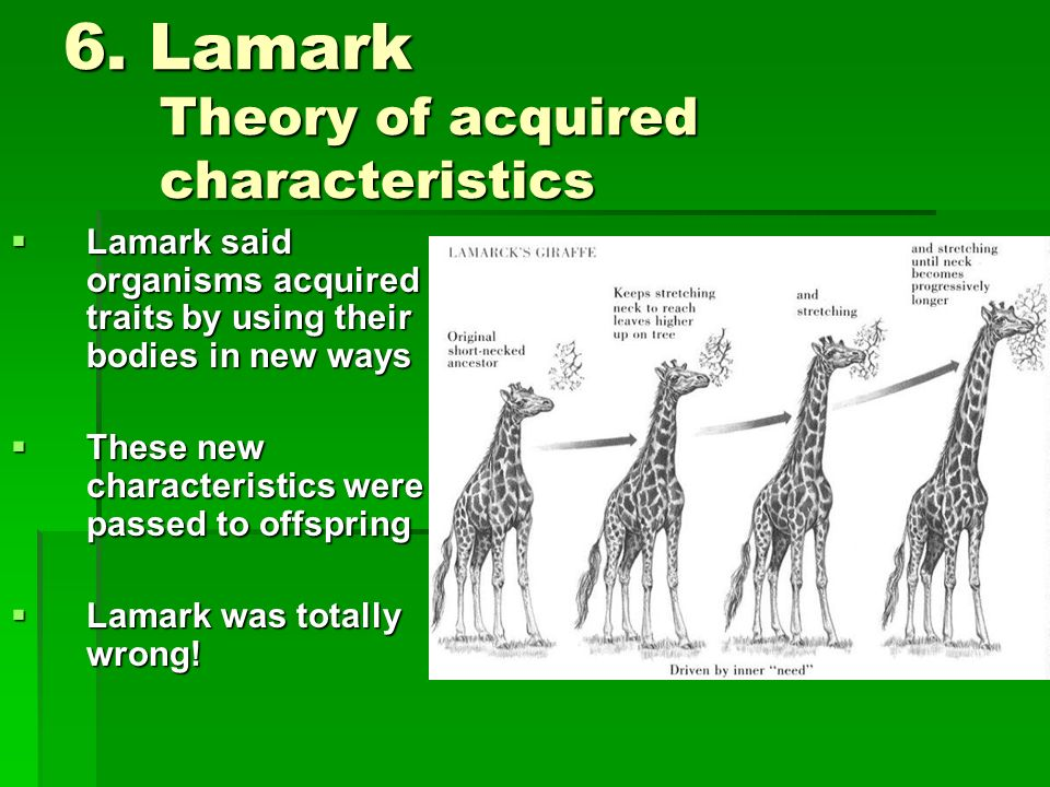 6. Lamark Theory of acquired characteristics