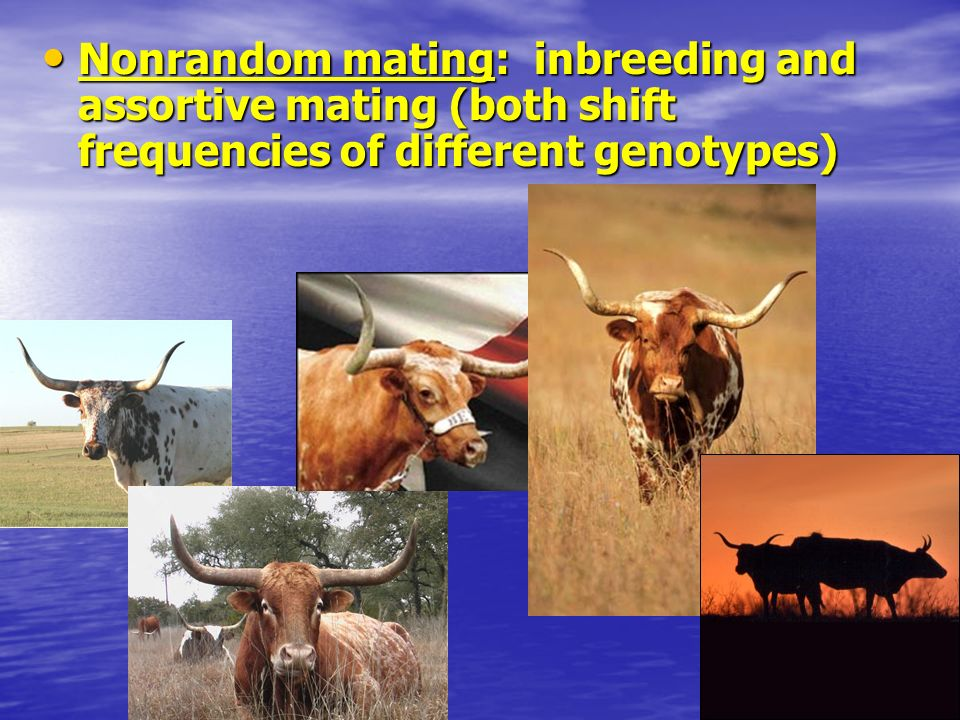 Nonrandom mating: inbreeding and assortive mating (both shift frequencies of different genotypes)