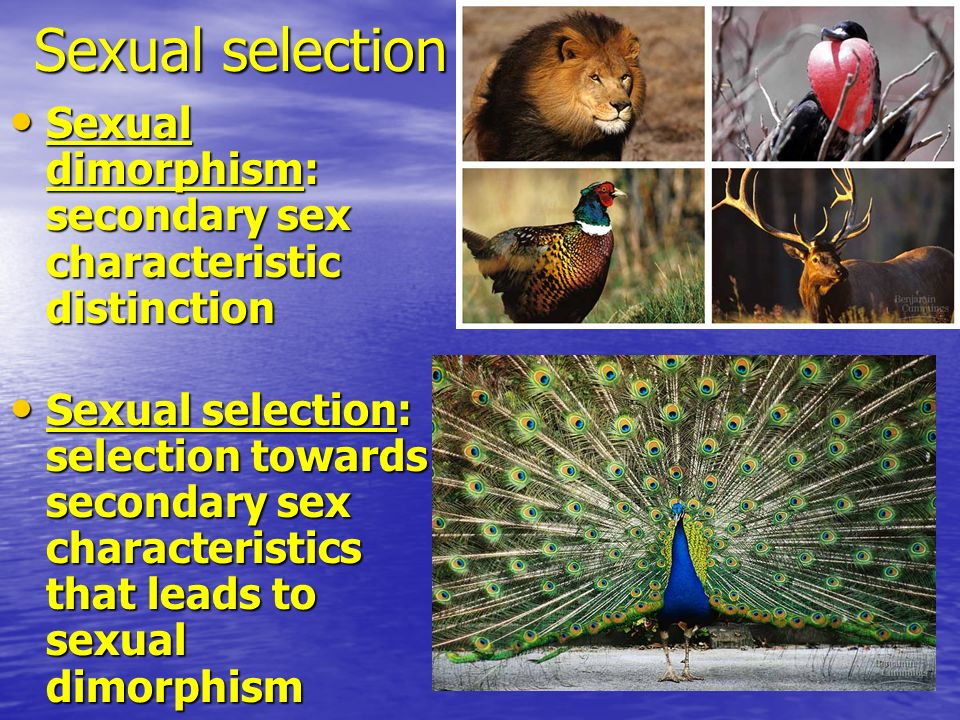 Sexual selection Sexual dimorphism: secondary sex characteristic distinction.