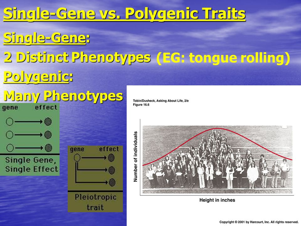 Single-Gene vs. Polygenic Traits
