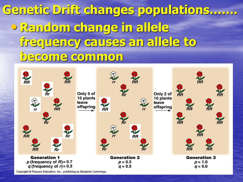 Genetic Drift changes populations…….