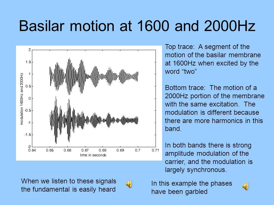 Basilar motion at 1600 and 2000Hz