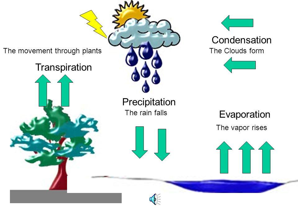 Condensation Transpiration Precipitation Evaporation The Clouds form