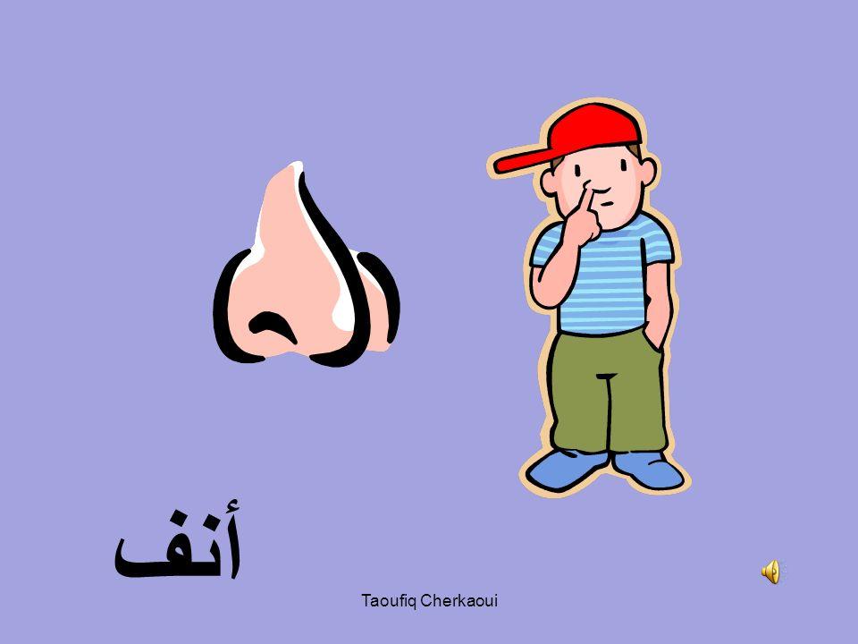 أنف Taoufiq Cherkaoui