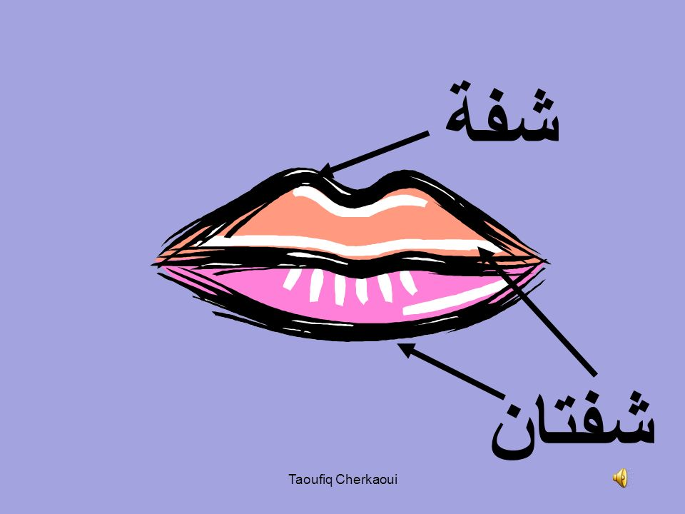 شفة شفتان Taoufiq Cherkaoui