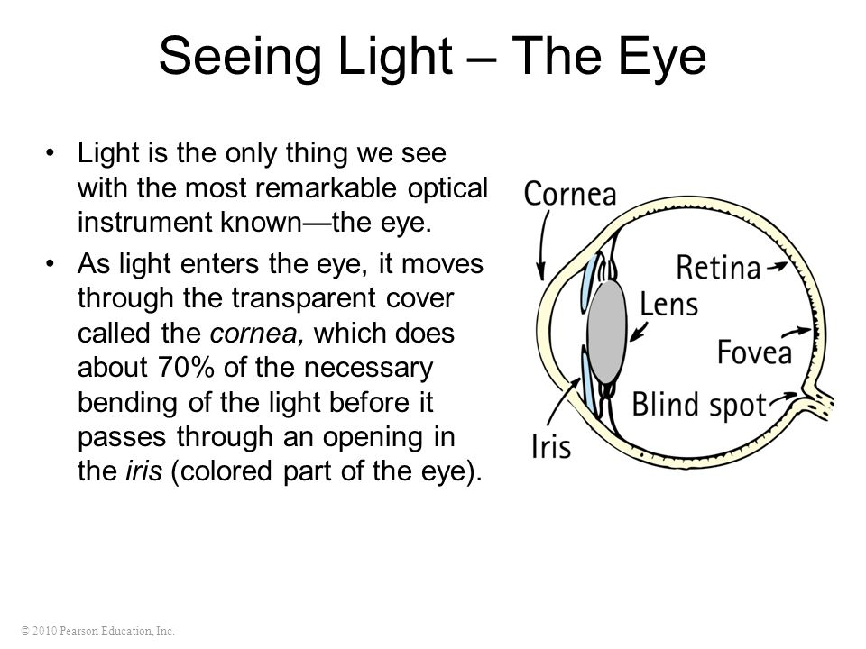 Seeing Light – The Eye Light is the only thing we see with the most remarkable optical instrument known—the eye.