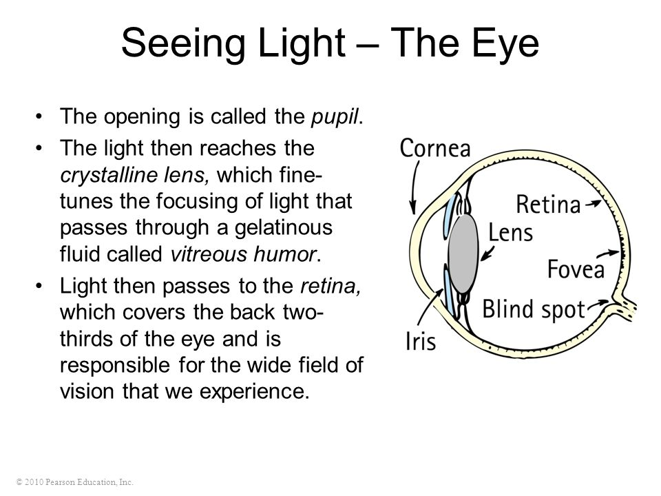 Seeing Light – The Eye The opening is called the pupil.