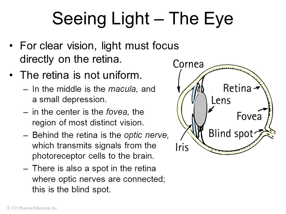Seeing Light – The Eye For clear vision, light must focus directly on the retina. The retina is not uniform.