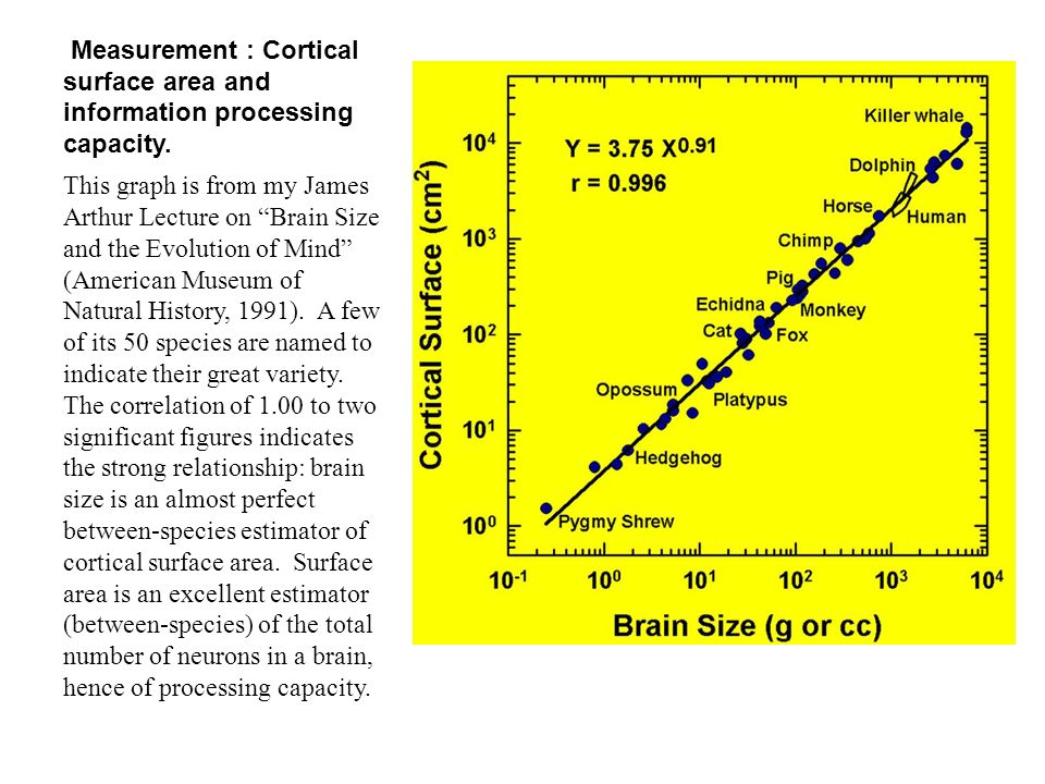 Measurement : Cortical surface area and information processing capacity.