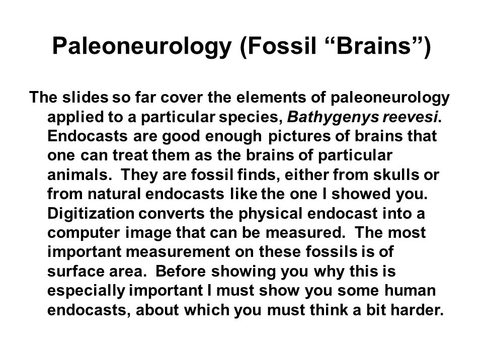Paleoneurology (Fossil Brains )