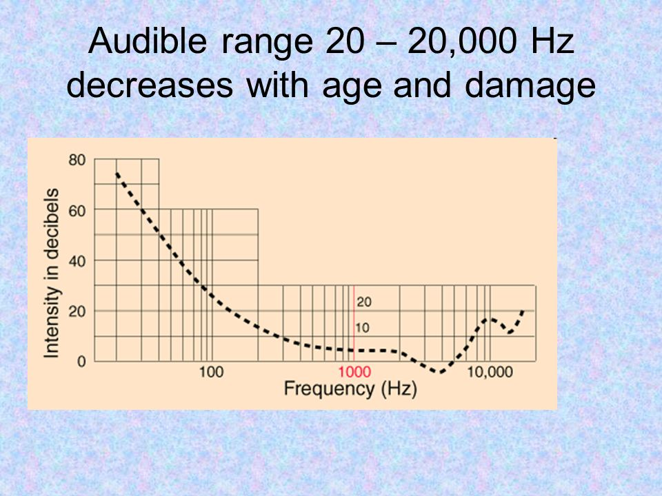 Audible range 20 – 20,000 Hz decreases with age and damage