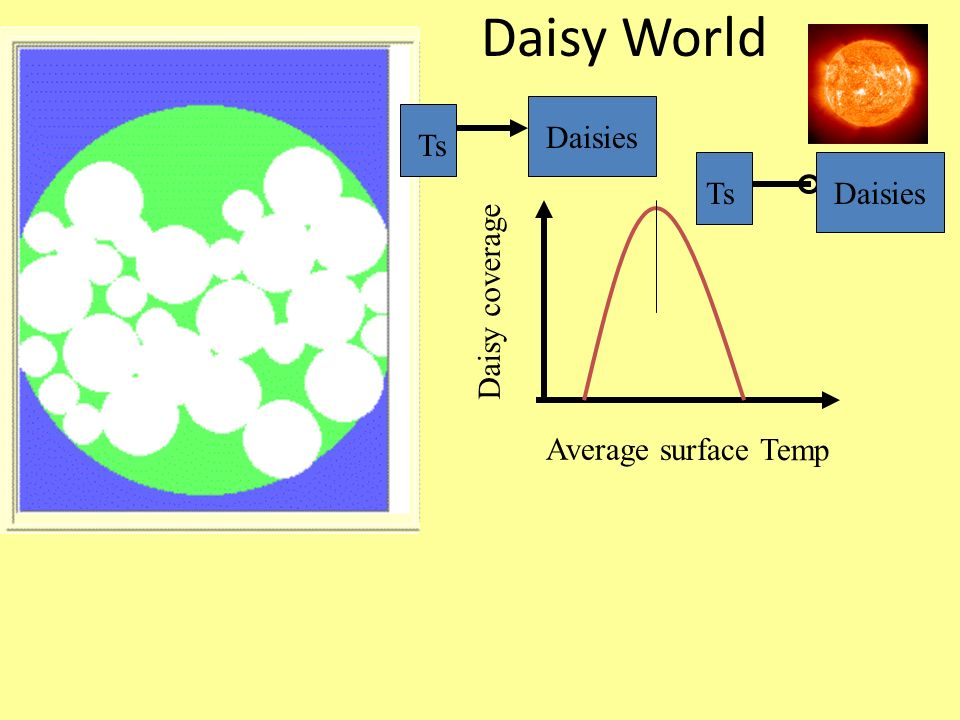 Daisy World Daisies Ts Ts Daisies Daisy coverage Average surface Temp