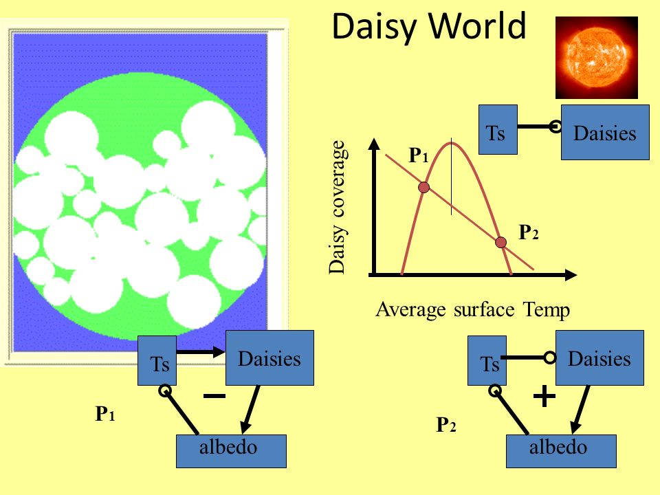 Daisy World Ts Daisies P1 Daisy coverage P2 Average surface Temp
