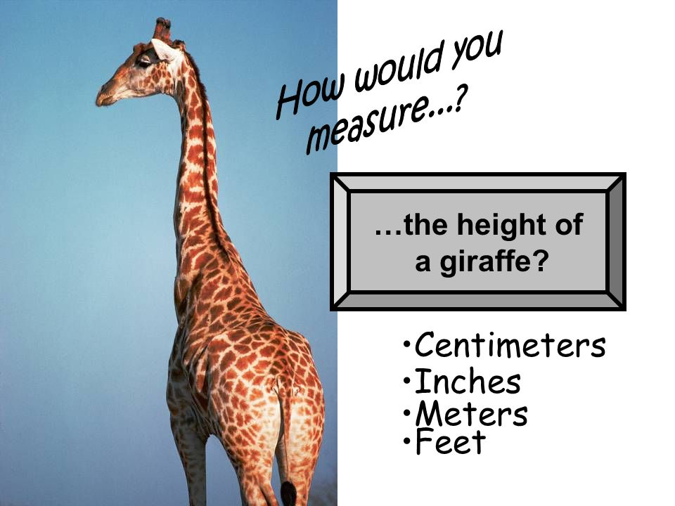 Centimeters Inches Meters Feet …the height of a giraffe How would you