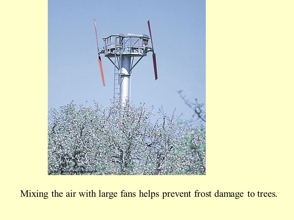 Mixing the air with large fans helps prevent frost damage to trees.
