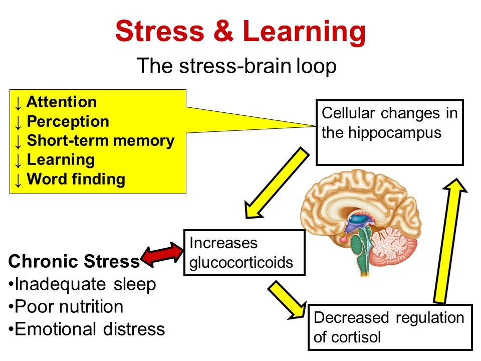learning and stress How anxiety scrambles your brain and makes it hard to learn levels of stress and anxiety are on the rise among students juliet rix has tips to control the panic and thrive academically.