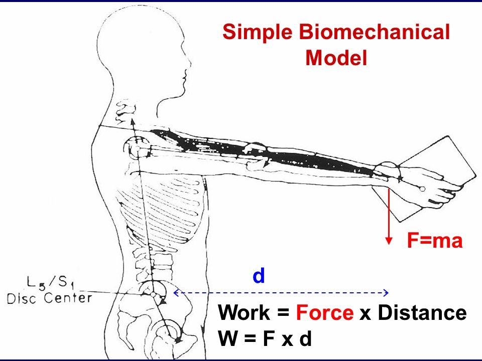 Simple Biomechanical Model