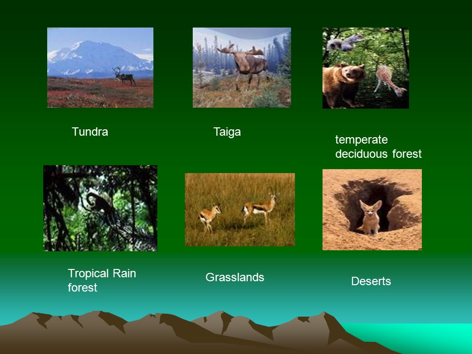 Tundra Taiga temperate deciduous forest Tropical Rain forest Grasslands Deserts
