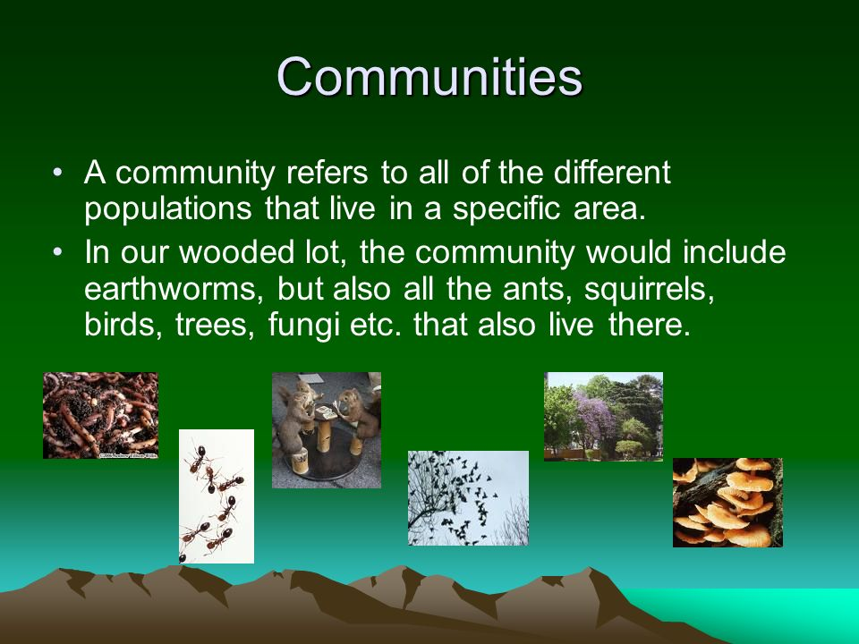 Communities A community refers to all of the different populations that live in a specific area.