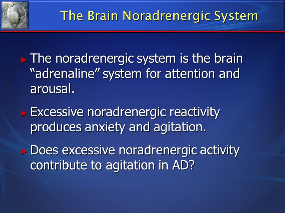 The Brain Noradrenergic System