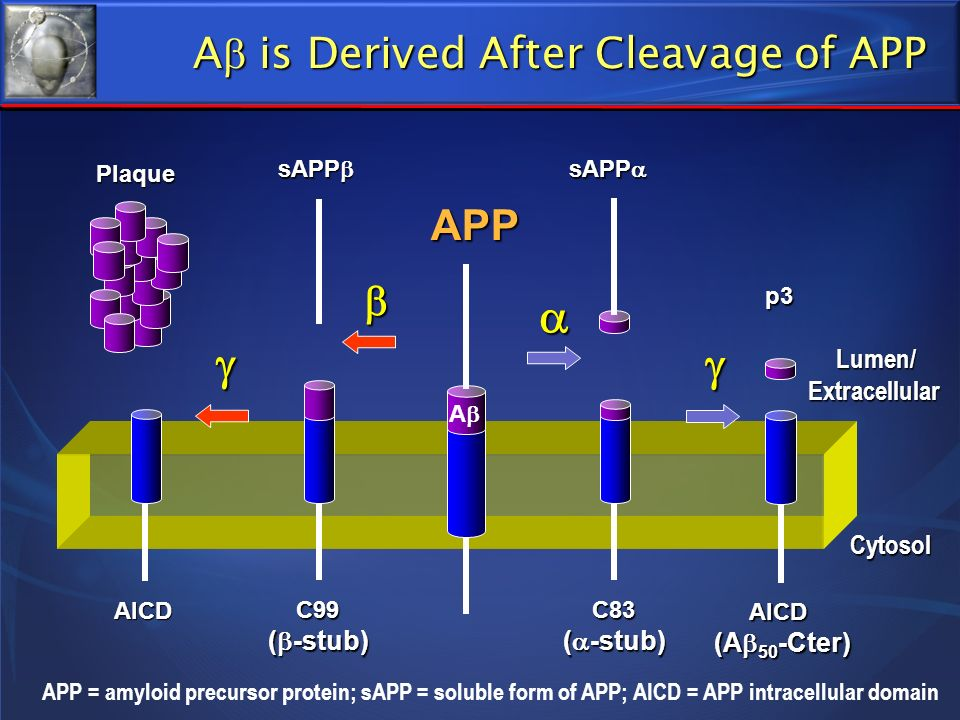 A is Derived After Cleavage of APP
