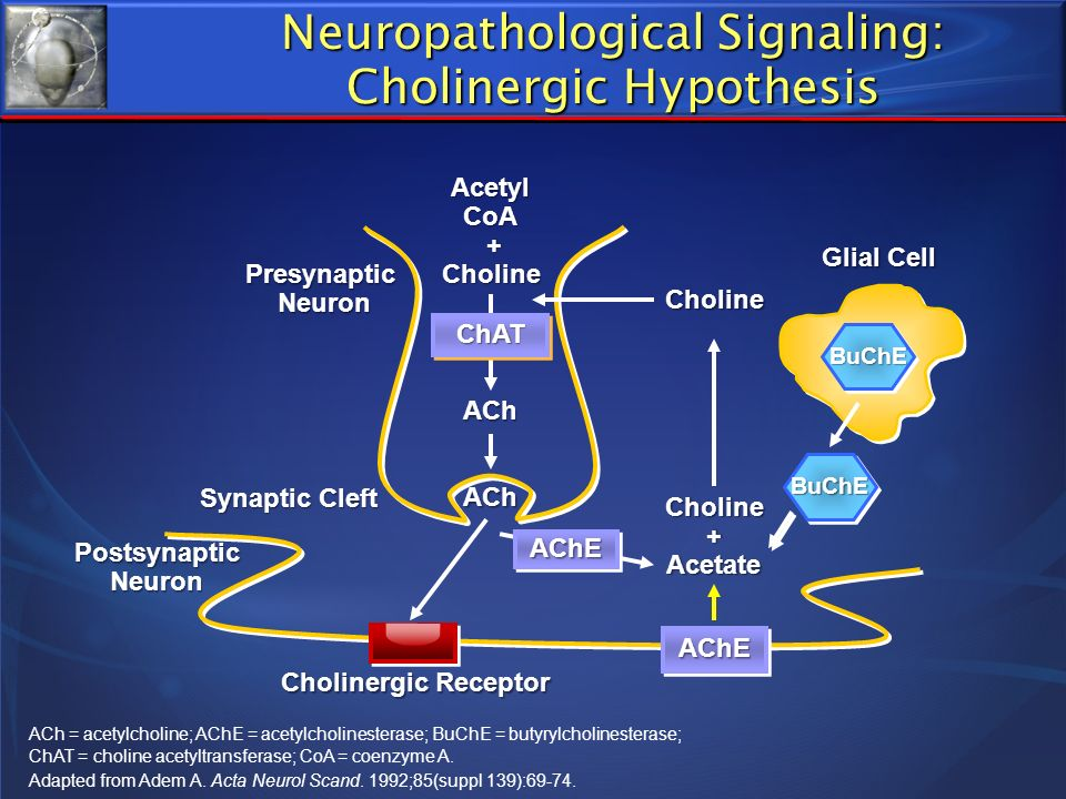 Neuropathological Signaling: Cholinergic Hypothesis