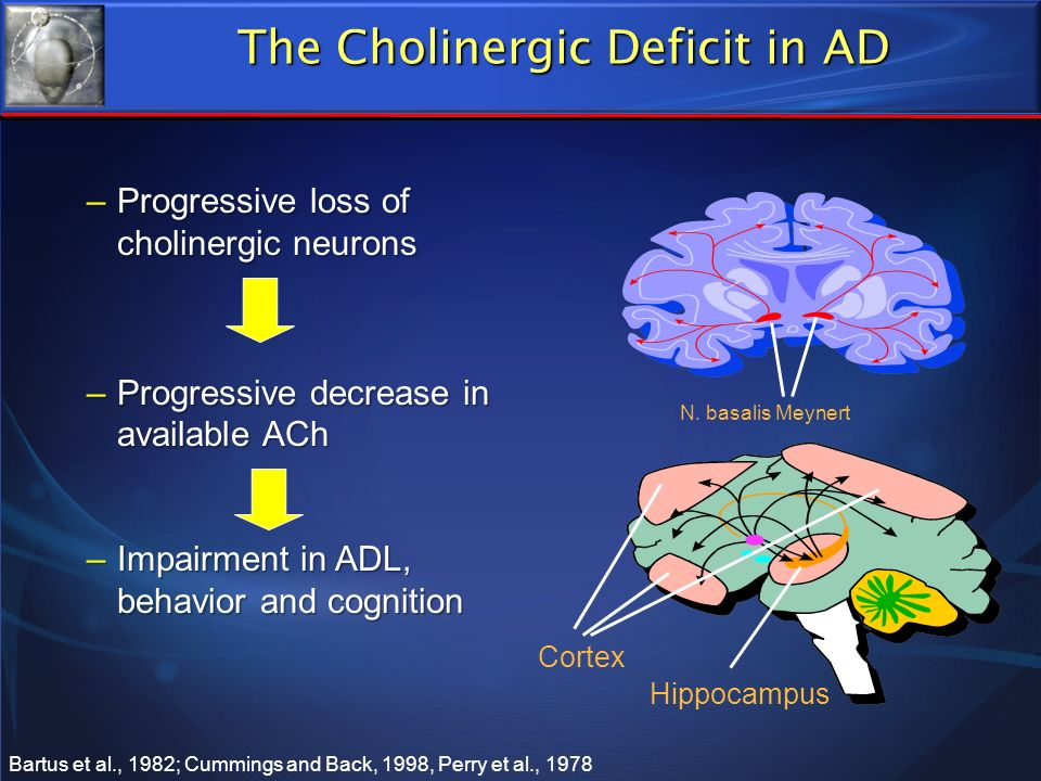 The Cholinergic Deficit in AD