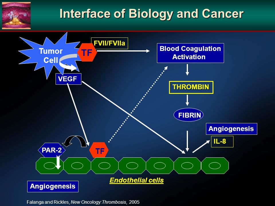 Interface of Biology and Cancer