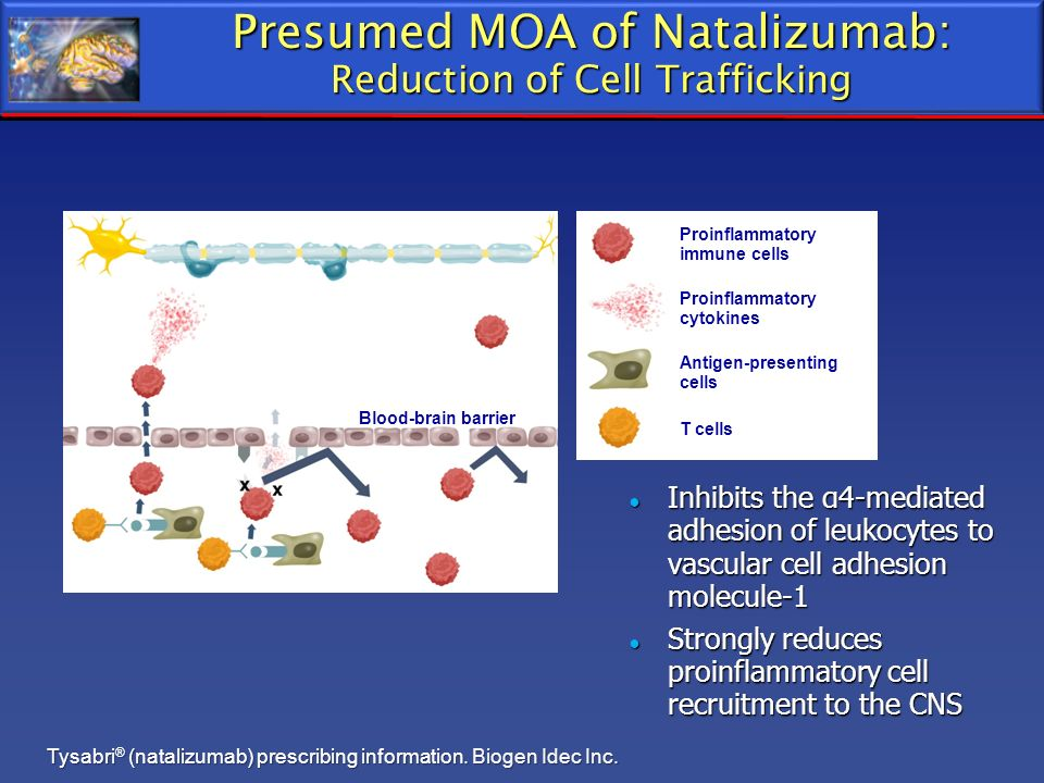 Presumed MOA of Natalizumab: Reduction of Cell Trafficking