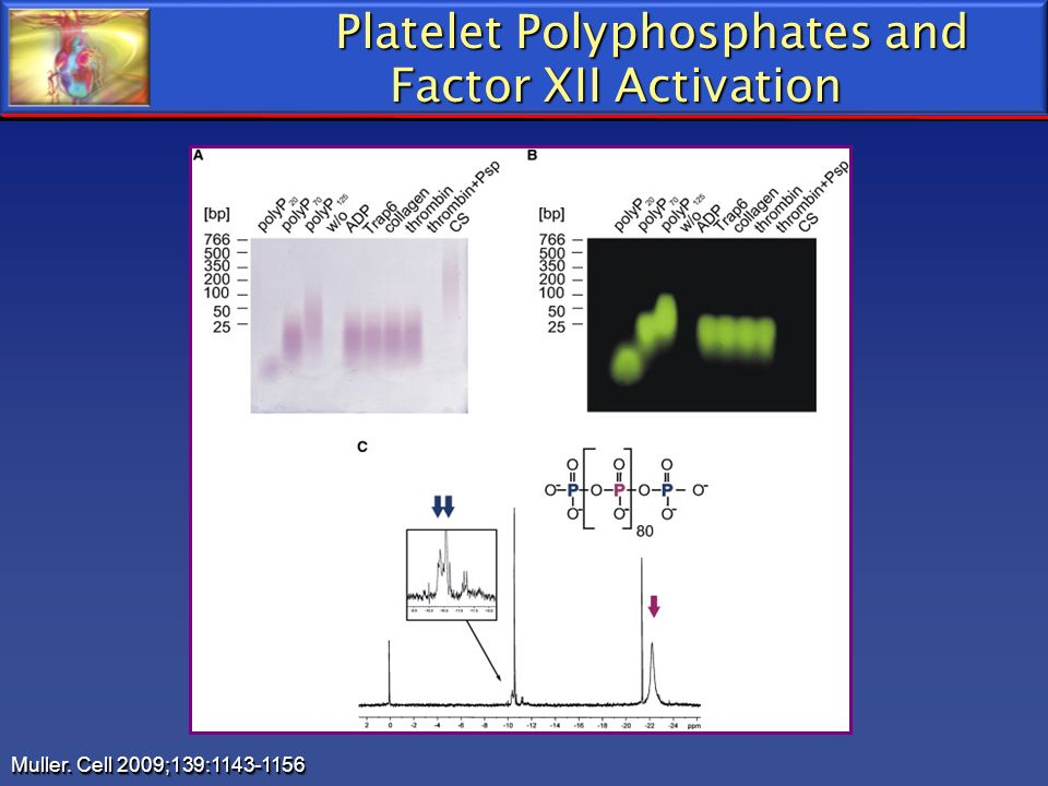 Platelet Polyphosphates and Factor XII Activation