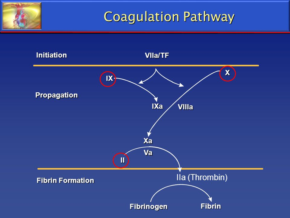 Coagulation Pathway IIa (Thrombin) Initiation Vlla/TF X IX Propagation