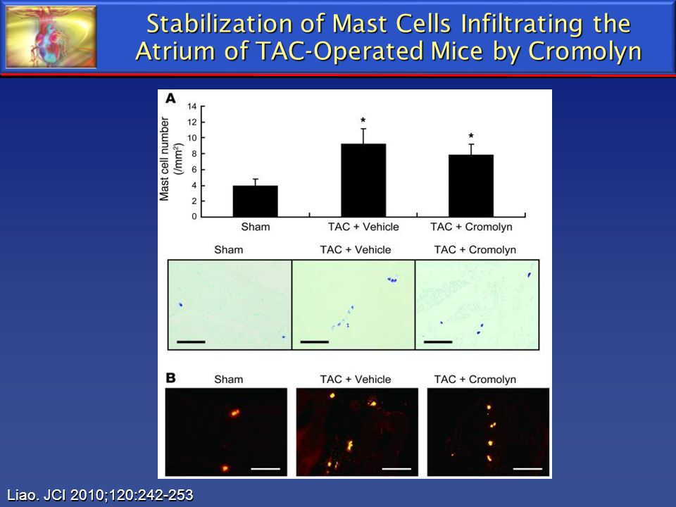 Stabilization of Mast Cells Infiltrating the Atrium of TAC-Operated Mice by Cromolyn