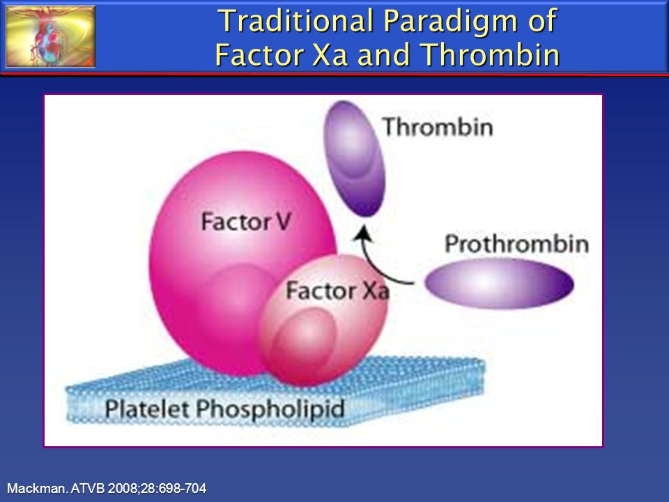 Traditional Paradigm of Factor Xa and Thrombin