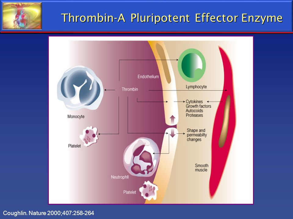 Thrombin-A Pluripotent Effector Enzyme
