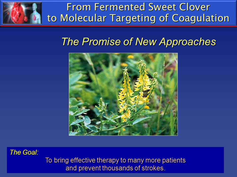 From Fermented Sweet Clover to Molecular Targeting of Coagulation The Promise of New Approaches
