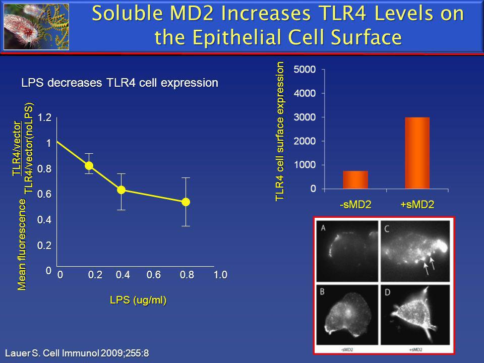 Soluble MD2 Increases TLR4 Levels on the Epithelial Cell Surface